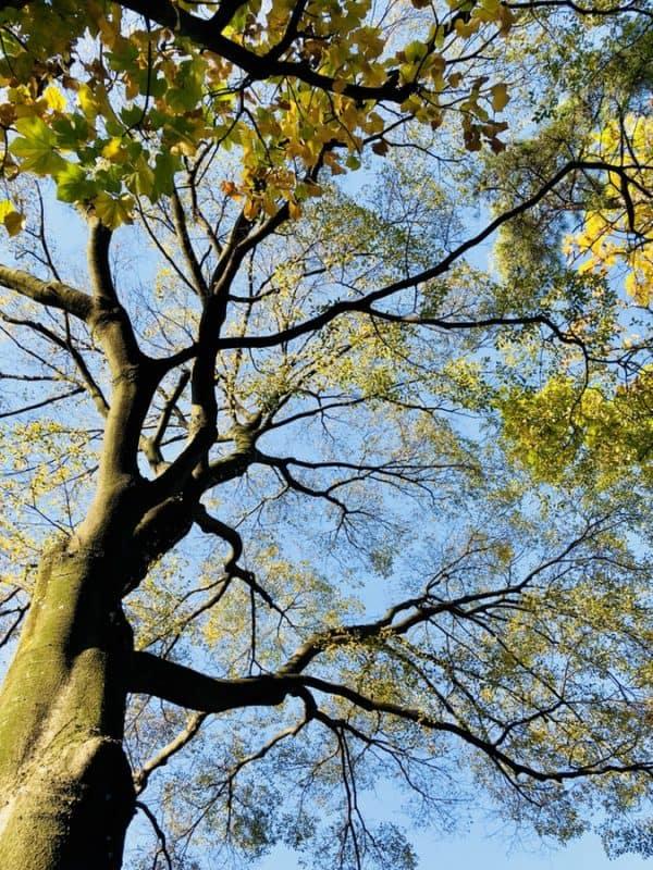 Baum BeSeaside Unsplash YXJ copyright
